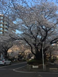 2019.04お花見⑤